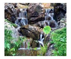 We Care For Your Pond And Water Features!